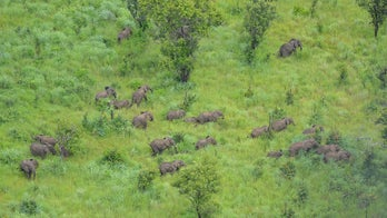 Mozambican wildlife reserve wipes out elephant poaching thanks to US support group