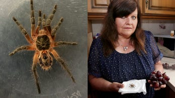 Grandmother finds live tarantula in grapes before giving them to her grandchildren