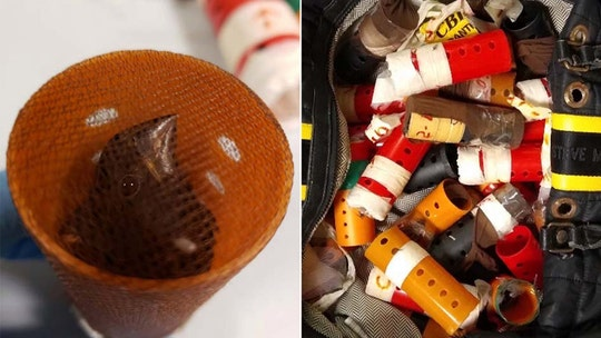 Man arrested at New York airport for allegedly smuggling 34 live song birds hidden inside plastic hair curlers