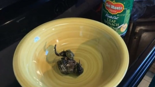 Pennsylvania woman claims to find dead, petrified bird in canned spinach: 'I am traumatized!'