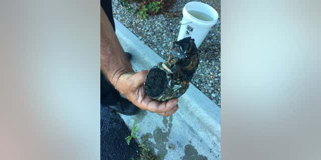 Authorities said a North Carolina beach-goer found this military ordnance at the beach and brought it home to put in their garden.