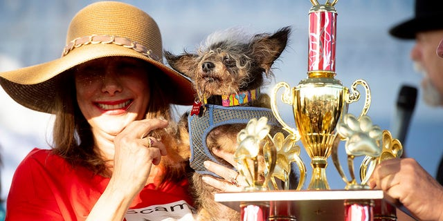 Westlake Legal Group AP19173135373322 Scamp the Tramp wins World's Ugliest Dog Contest fox-news/lifestyle fox-news/entertainment/genres/pets fox news fnc/lifestyle fnc Brie Stimson article 953643c2-21f1-59a6-b51b-7032ff17de9a