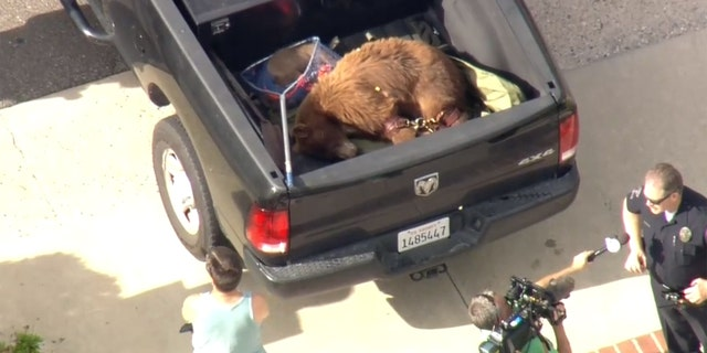 A mother bear slashed and bit a man in a Los Angeles suburb after the man's dog tried to attack the bear's cub and the animal went after the dog.