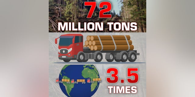 The Florida Forest Service estimates that Michael left 72 million tons of rotting timber on the ground, enough to fill 2.5 million log trucks, which would wrap around the earth 3.5 times.