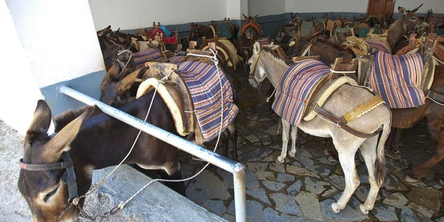 """The holiday season on islands is now a lot longer than it used to be, meaning that the donkeys are pretty much working the whole year round,"" Christina Kaloudi, founder of the Santorini Animal Welfare Association said."