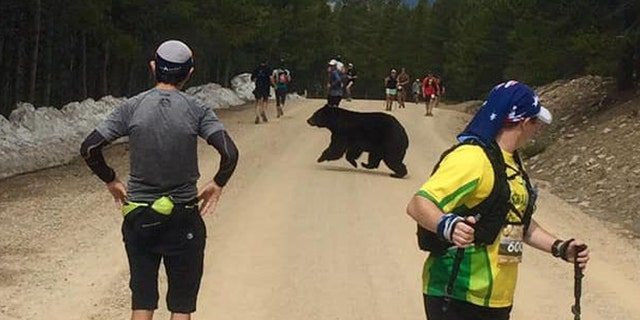 A bear crossed between runners during the Leadville Trail Marathon in Colorado Springs last weekend