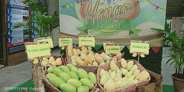 Westlake Legal Group Mango-Festival-2 Philippines aims to sell 2.2M pounds of mangoes in June after fruitful harvest: official Paulina Dedaj fox-news/world/world-regions/asia fox-news/odd-news fox news fnc/world fnc article 8f1a9c9e-9744-508d-bbd2-a30035126ed1