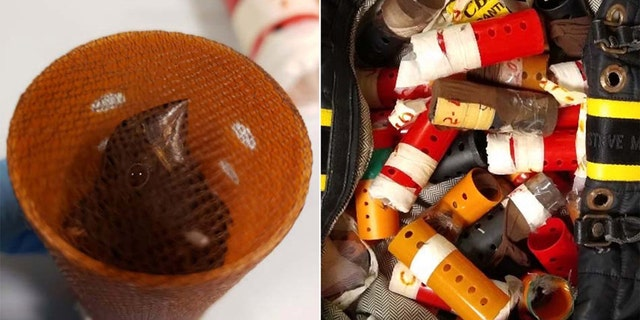 U.S. Customs and Border Protection nabbed a passenger attempting to smuggling 34 singing finches, each concealed inside a plastic hair curler, inside his carry-on bag.