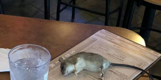 Live rat falls from ceiling at Buffalo Wild Wings
