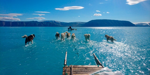 In this photo taken on Thursday, June 13, 2019 sled dogs make their way in northwest Greenland with their paws in melted ice water. Diplomats and climate experts gathered Monday in Germany for U.N.-hosted talks on climate change amid growing public pressure for governments to act faster against global warming. Over the weekend, a picture taken by Danish climate researchers showing sled dogs on the ice in northwest Greenland with their paws in melted ice water was widely shared on social media. Greenland's ice melting season normally runs from June to August but the Danish Meteorological Institute said this year's melting started on April 30, the second-earliest time on record going back to 1980. (Danmarks Meteorologiske Institut/Steffen M. Olsen via AP)