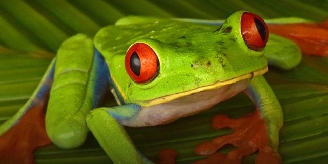 (Credit: Trond Larsen/Conservation International)