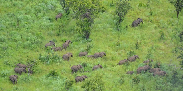 Already the park's elephant population has increased by approximately 250 in the past two years.
