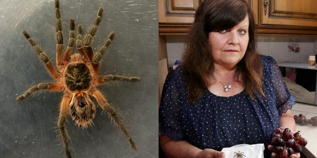 The spider was eventually identified as a baby tarantula. It's unclear how it survived the trip to England from Chile, where the grapes apparently originated.