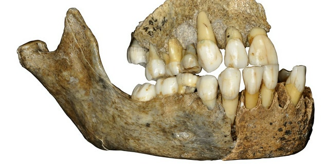 Scientists mapped the complete genomes of the 120,000-year-old bones from Western Europe,shedding fresh light on the history of our closest extinct ancestors.(Credit: SWNS)