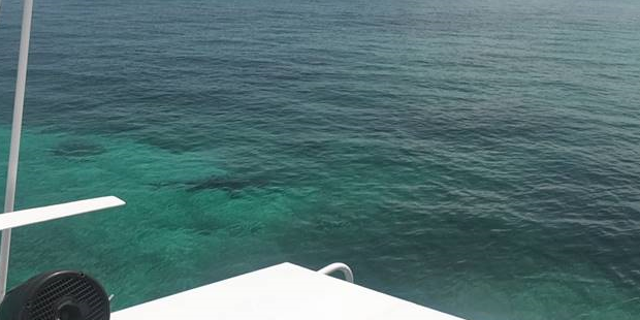 The photo was taken by another tourist who was in the area when the attack occurred. The shark is supposed to be on the left side of the photo.