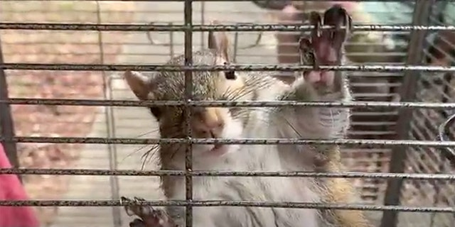 'Attack squirrel' rescued at scene of Alabama meth bust