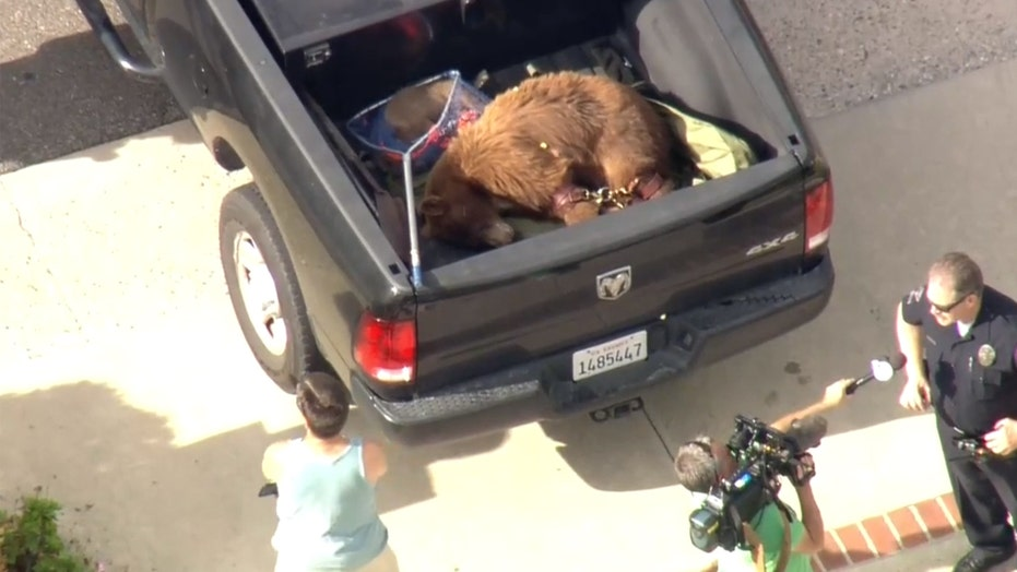 Mama bear attacks California man in LA suburb after dog went after