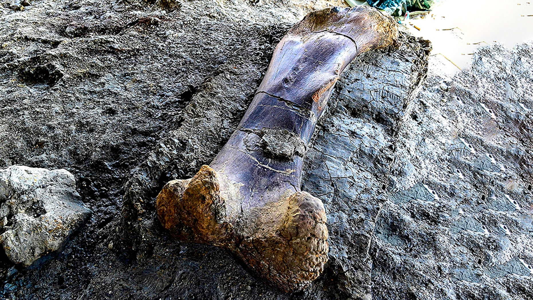 Telah Ditemukan Tulang Dinosaurus Raksasa Seberat 40 Ton, Terbesar di Dunia - Brondat.com