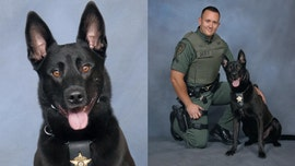 Georgia police dog shot and killed by deputy during pursuit, sheriff says