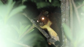 Mysterious flying squirrel with 'glowing eyes' discovered in China