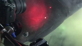 Diver Has epic encounter with mysterious, elusive shark