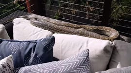 Family finds giant python snake sunbathing on their deck