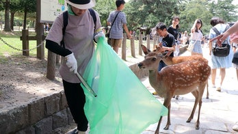 9 deer at famed Japanese park die after swallowing plastic bags