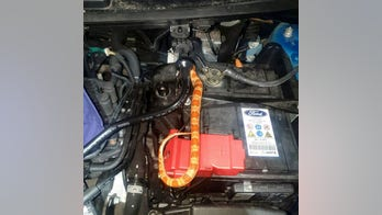 Snake hid in car for three days while owner drove it