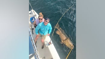 Fishermen catch goliath grouper weighing 350 pounds: 'I've never seen people so excited in my life'