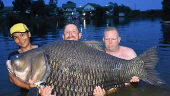 British man says he caught record-breaking 232-pound carp fish in Thailand