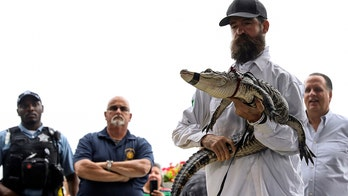 Reptile wrangler who retrieved alligator from Chicago lagoon throws first pitch before Cubs game