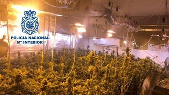 Spanish politician arrested for alleged underground marijuana operation