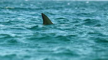 Coast Guard scares off shark to protect swimming crew members, video shows