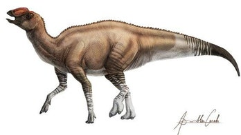 Mysterious new duck-billed dinosaur found