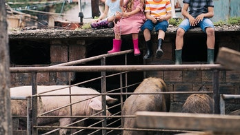 California fair organizers, citing animal welfare concerns, do away with 'pig scramble' in favor of watermelon event, report says