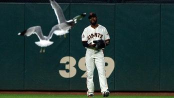 San Francisco Giants deter invading seagulls with 'Cha Cha Slide'