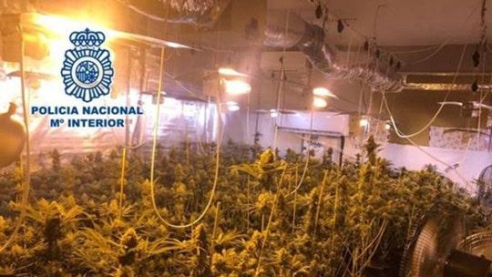 Spanish politician arrested for alleged underground marijuana operation