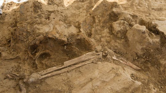 Grisly amputated limbs, French howitzer shell, discovered at Battle of Waterloo site