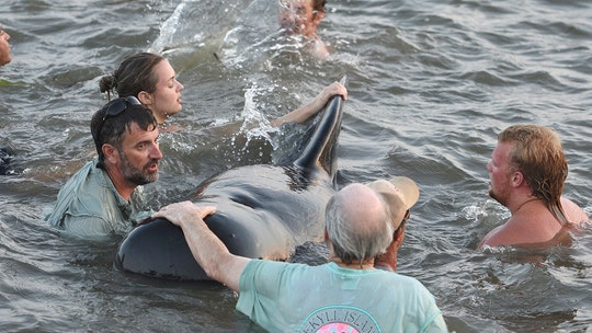 Georgia beachgoers rescue whales mass stranded on shore, wildlife officials say