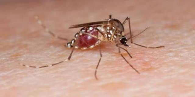 Mosquitoes are captivated to people with form O blood, lactic acid, and urea in sweat.