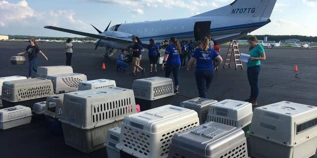 Westlake Legal Group 66711588_10157599206069916_8302360353707130880_o Volunteers rush to transport shelter animals threatened by Barry out of storm's path Vandana Rambaran fox-news/us/us-regions/southeast/virginia fox-news/us/us-regions/southeast/north-carolina fox-news/us/us-regions/southeast/louisiana fox-news/us/us-regions/southeast/georgia fox-news/us/us-regions/northeast/new-jersey fox-news/lifestyle/pets fox news fnc/us fnc ef84ff18-325d-5aa1-9661-225f6994e868 article