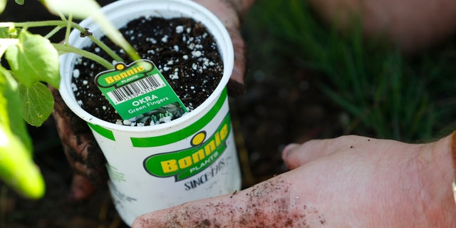 The homeowners held a ceremonial replanting of vegetables in their front yard as legislation to allow such gardens statewide went into effect July 1, following their long court battle to challenge a Village of Miami Shores' prohibition on front yard gardens. (AP Photo/Wilfredo Lee)