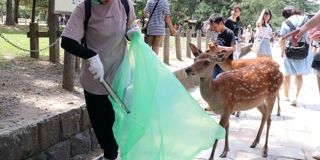 Nine deer in the park have recently died after swallowing plastic bags. There are more than 1,000 deer at Nara Park, and tourists can feed them with special sugar-free crackers sold in nearby shops. (Kyodo News via AP)