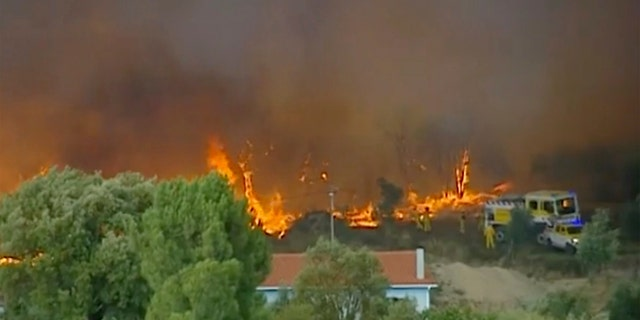 Portugal fire: Over 1000 firefighters tackle blaze, seven reportedly hurt