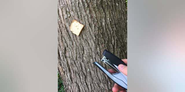 """I found a surprising amount of pride and identity in something as simple as stapling sliced bread to a worthy tree,"" Reddit user TheSouthPawScrub tells Fox News"