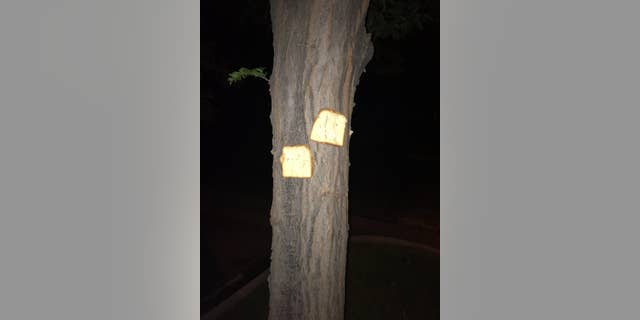 One user shared a photo of a double-breading given to a tree in Fort Collins, Colo.