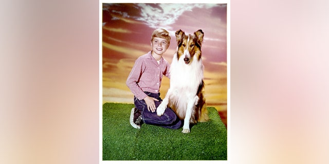 "Jon Provost and Lassie in publicity portrait for the television series ""Lassie,"" 1954. (Photo by CBS/Getty Images)"