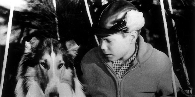 Jon Provost with Lassie, circa 1962 — Getty