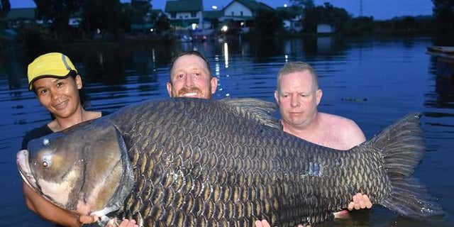 John Harvey, center, says he caught a 232-pound carp fish in Thailand.