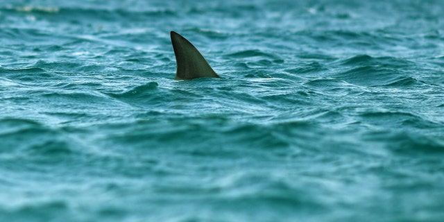 Westlake Legal Group Shark-2 Shark bites girl, 16, who was boogie boarding on Florida vacation, reports say Frank Miles fox-news/us/us-regions/southeast/florida fox-news/us/disasters fox-news/science/wild-nature/sharks fox news fnc/us fnc article 35c48efa-474c-5ddc-b664-ea8755fe698b